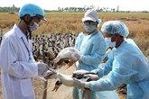 Phòng chống dịch bệnh những tháng cuối năm: Nhiều nguy cơ bùng phát dịch