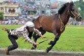 """Cấp cứu khi """"ngã ngựa"""""""