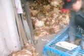 H7N9 chưa vào Việt Nam