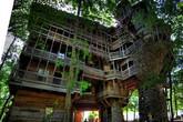 Cận cảnh ngôi nhà trên cây lớn nhất thế giới