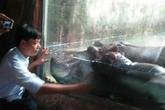 Thú chăn hổ, nuôi hà mã tốn kém bạc tỷ của đại gia Việt