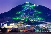 Ngắm cây thông Noel lớn nhất thế giới
