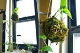 2 cách trồng cây cực xinh cho mùa hè