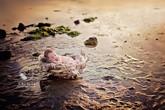 Giấc ngủ ngon lành giữa thiên nhiên của bé
