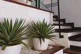 Có nên trồng cây ở chân cầu thang?
