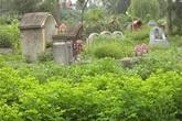 Kinh hoàng 'rau xanh nghĩa địa'