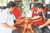 Chó cứu mạng bé sơ sinh trong túi rác