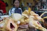 Phát hiện kháng sinh độc trong gà làm sẵn