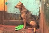 Câu chuyện về chú chó chăm sóc 2 em bé bị mẹ bỏ rơi