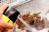 Cách dùng thuốc diệt côn trùng không gây hại sức khỏe