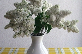 Cách đơn giản giữ hoa tươi lâu