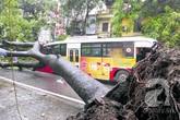 Cây đổ bẹp xe buýt đang chạy trong sáng ngày khai trường