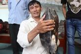 Hoảng hồn với cụ rùa nặng 12kg nửa đêm bò vào nhà dân