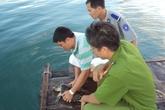 Chủ quán nhậu đồng ý thả động vật quý hiếm về biển
