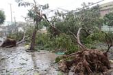 Đà Nẵng nhanh chóng khắc phục hậu quả bão số 11