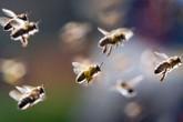 Làm gì khi ong đốt?