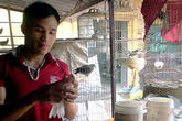 Chàng trai dạy chim hót kiếm bạc tỷ