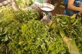 Nông dân kể phun thuốc trừ sâu, kích thích rau ngót