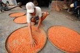 Cận cảnh quy trình làm tôm khô đặc sản ở miền Tây