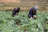 Rượu bia và những nguy hại cho đàn ông Việt