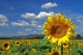 Ukraina – Đất nước hoa hướng dương