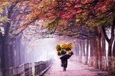 Những mùa thu đẹp nhất trên thế giới