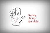 Tự xem số phận qua bàn tay: Đường sức khỏe có thể cấp báo về nguy hiểm tính mạng