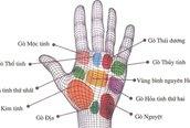 Tự xem số phận qua bàn tay: 9 gò trong lòng bàn tay