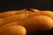 Triệu chứng của bệnh sốt xuất huyết