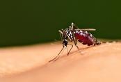 Đừng chết vì... con muỗi