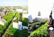 Đây là 5 trang trại sân thượng ưu việt nhất trên thế giới