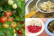 Tự chế 5 loại thuốc trừ sâu thiên nhiên cực hiệu quả, cả năm rau không sâu bệnh