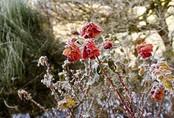 Dự báo độ cực lạnh trong đợt rét đậm, rét hại mạnh nhất từ đầu đông