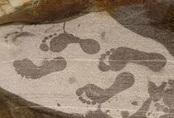 Phá án bằng dấu vân chân dính máu