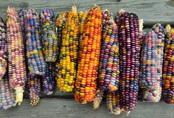 """Những loại rau củ """"rực rỡ sắc màu"""" khiến nhiều người không tin chúng có thật"""