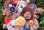 Thì ra trên Trái đất còn có những cây nấm rực rỡ sắc màu đẹp hơn cả hoa thế này