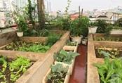 Khu vườn sân thượng vỏn vẹn 27m² ngập tràn rau, trái cây và hoa của bà mẹ hai con ở Hà Nội