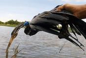 Người Sài Gòn giăng lưới bẫy được chim cổ rắn quý hiếm