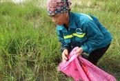 Dân Hà Nội đổ xô đi bắt ốc bươu vàng ven đại lộ Thăng Long kiếm vài trăm nghìn mỗi ngày