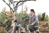 Gốc hồng Mẫu tử trăm tuổi: Trả tiền tỷ quyết không bán cho Trung Quốc