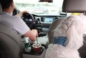 Taxi cho thú cưng ở Hàn Quốc