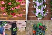 10 ý tưởng tuyệt vời trồng cây thẳng đứng tiết kiệm không gian cho nhà chật