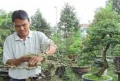 Bỏ nghề giáo viên về trồng cây cảnh, kiếm 200 triệu đồng/năm