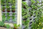 Cách trồng rau trong túi vải vừa sạch vừa rẻ dành cho nhà chật