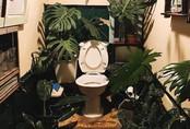 """Nhà vệ sinh """"cây nhà lá vườn"""" thơ mộng thách tiền không ai dám... cởi quần vì lý do này!"""