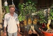 Người đàn ông ở Cần Thơ dát vàng lên gốc cây bán dịp Tết