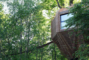 Ngôi nhà gỗ trên cây sồi trăm tuổi