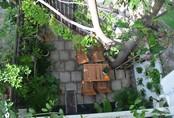 2 vườn rau đẹp xao xuyến của bà mẹ 8X ở Sài Gòn