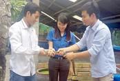 Cử nhân đại học về quê nuôi lươn không bùn, thu 500 triệu/năm