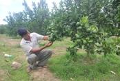 """Lão nông """"đút túi"""" nửa tỷ đồng mỗi năm từ vườn cây ăn trái hữu cơ"""